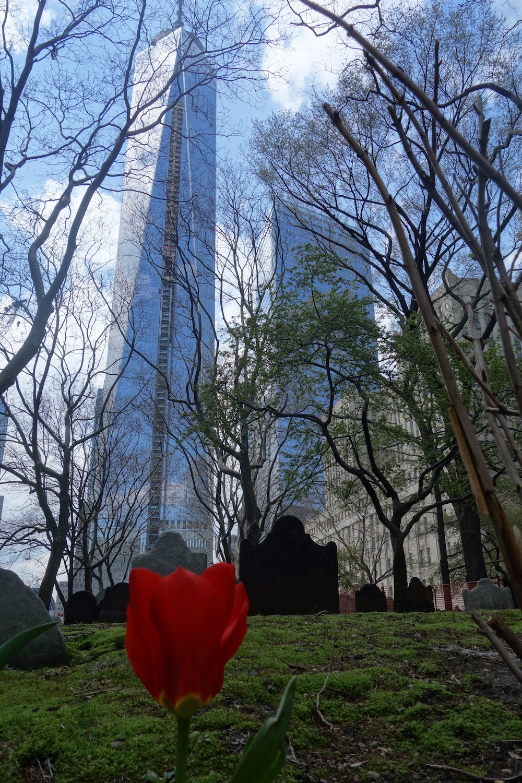 Neuer Turm & neue Tulpe