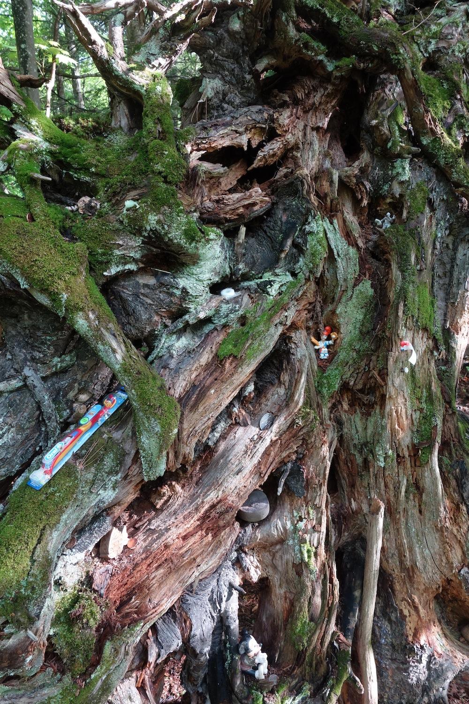 Baum/Schrein
