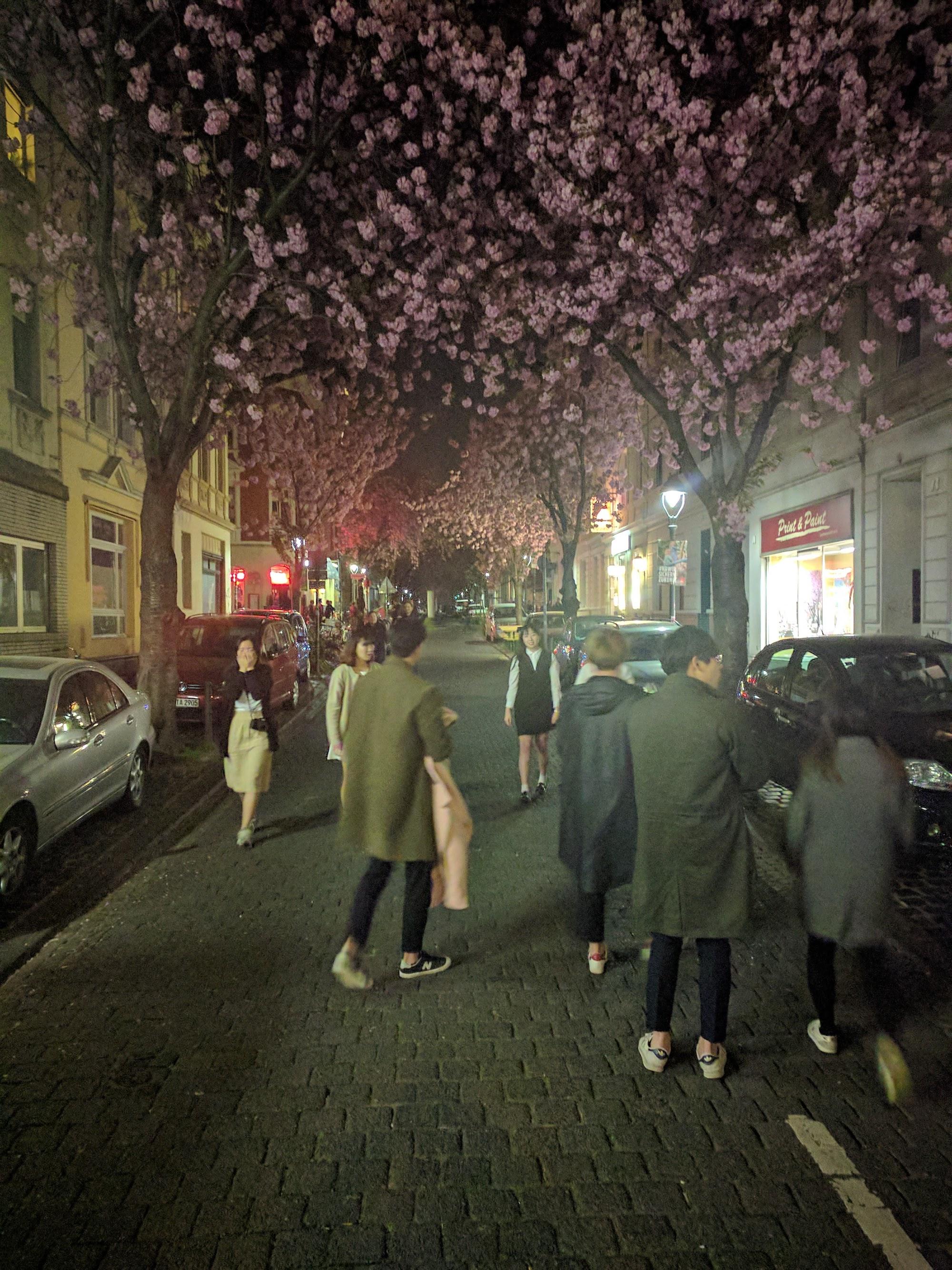 Kirschblüten und asiatische Touristen (in der Bonner Altstadt)