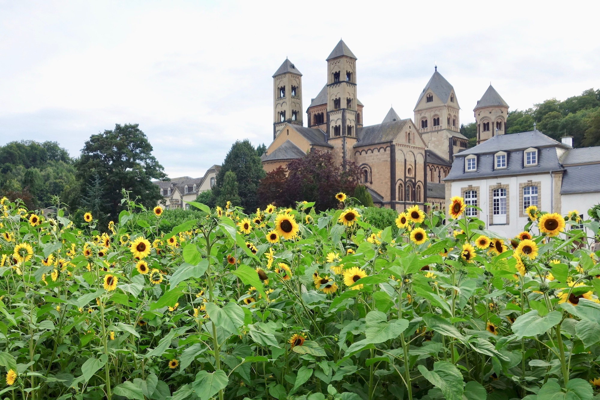 Abteikirche Maria Laach (und Sonnenblumen)